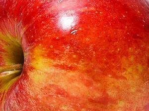 Der Verzehr eines kompletten Apfels pro Tag ist laut einer heute veröffentlichten Studie nicht gesundheitsgefährdend. Selbst eine weitere Hälfte könnte man problemlos täglich essen.