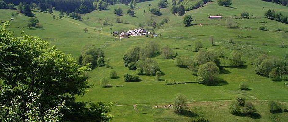 Hier irgendwo im Schwarzwald haben Archäologen einen vollständig erhaltenen Neuzeit-menschen gefunden.