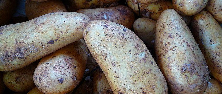 """Weshalb sich das alte Gerücht im Volksmund so hartnäckig hält, kann Hegener nicht genau sagen. Allerdings hat er eine Vermutung: """"Besonders bei den dümmeren Bauern hatten wir gewisse Schwierigkeiten, überhaupt das Feld mit den Kartoffeln zu finden, da man uns stattdessen häufig versehentlich zu den Kürbissen geführt hatte. Vielleicht stammt daher das Missverständnis."""""""