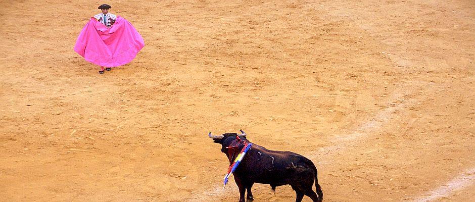Kurz vor seinem finalen Angriff wirft Nùmero 5 (rechts im Bild) noch einmal einen letzten Blick auf den Matador Miguel Antonio José.