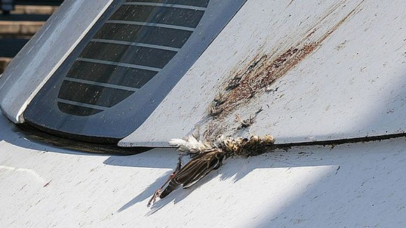 Nicht nur, dass ein Vogelschlag für Vögel oft tödlich endet - zusätzlich hinterlässt eine Kollision auch einen großen unschönen Fleck auf dem betroffenen Flugkörper, der beim Besitzer nicht selten für Verärgerung sorgt.