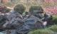 Ob auch Bestandssoldaten in den Genuss der 72 Jungfrauen kommen werden? Der Bundesrechnungshof sieht das kritisch.