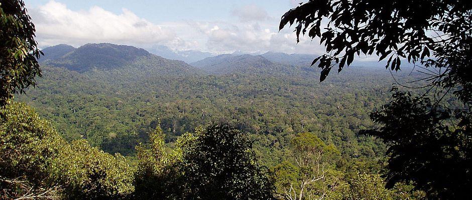 Ein Mörder läuft im australischen Dschungel frei herum.