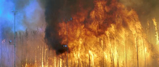 Sieht aus wie ein Waldbrand, ist aber bloß eine Rodung zur Vermeidung von Waldbrände.