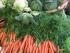 Beim ersten Blick kaum von normalem Gemüse zu unterscheiden: Von Sehnen und Knorpeln durchzogene Karotten und anderes Grünzeug, das bisher kaum ein Fleischesser freiwillig verspeisen wollte.