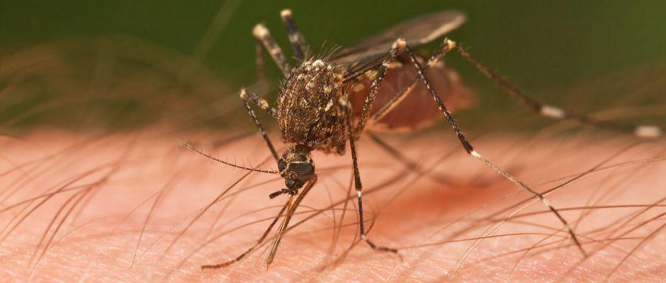 Nicht gleich zuhauen. Erstmal das Gespräch mit der Mücke suchen.