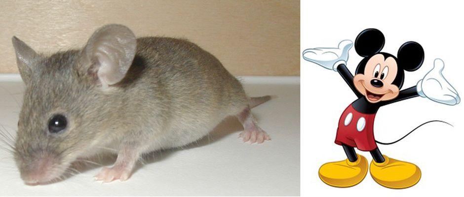 Besonders beliebt soll das Einfangen von kleinen Micky Mäusen sein.